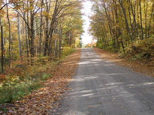 <b>McKinley Road in Autumn by Catherine Walsh</b>
