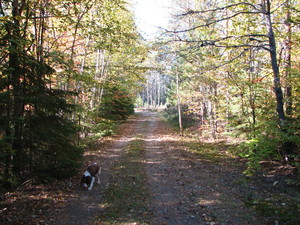 <b>Dog in Fall by P. MacDonald</b>