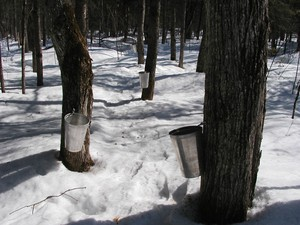 <strong>Sugar Bush by Catherine Walsh</strong>
