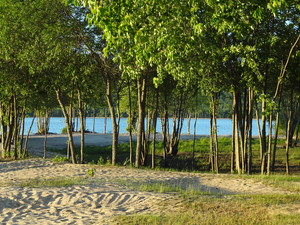 <strong>Trees on Beach by Dan Wilson</strong>