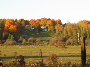 <strong>Billy Hogue Farm in Fall by P. MacDonald</strong>